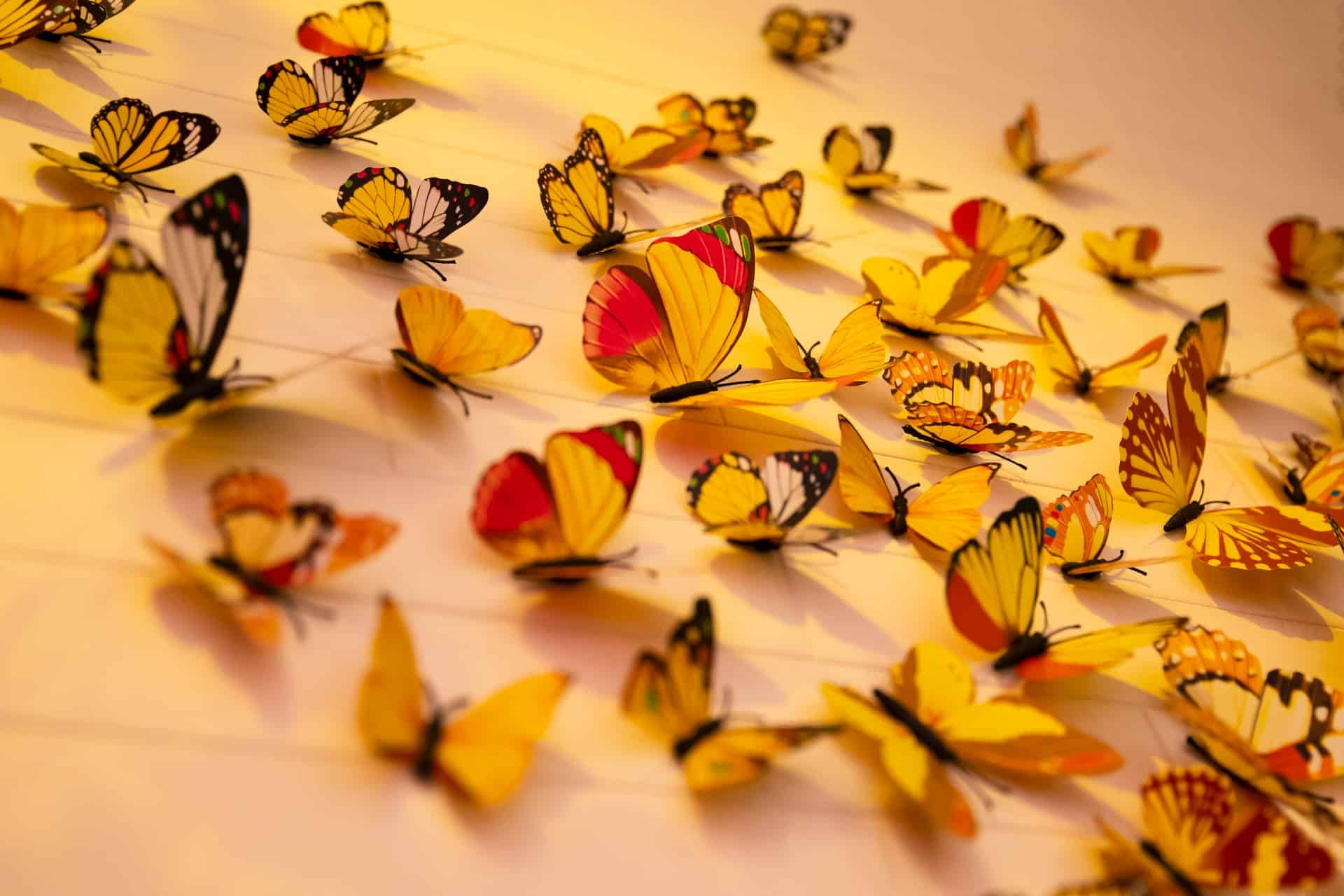 What do butterflies symbolize