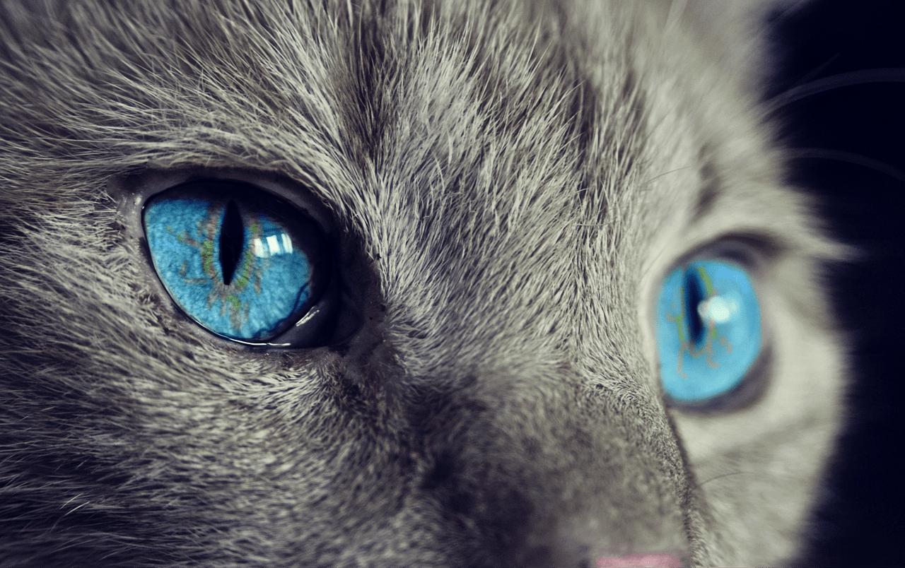 Cat spiritual meaning